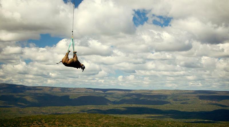 WWF: Rinoceronti volanti contro il bracconaggio thumbnail