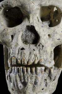 L'uomo di Dmanisi, un antenato comune thumbnail