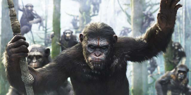 Top 7 (+1): la classifica delle scimmie malvagie thumbnail