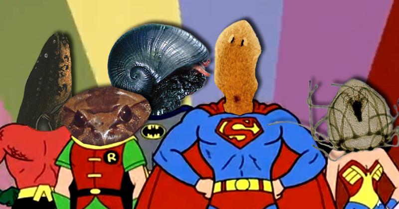 Superpoteri animali: una squadra di eroi tutta naturale thumbnail