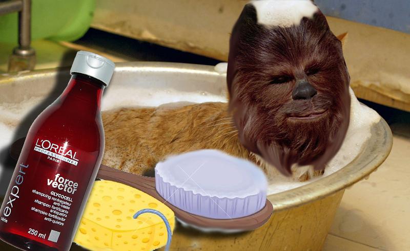 StarWarsDay: come prendersi cura del proprio Wookiee thumbnail