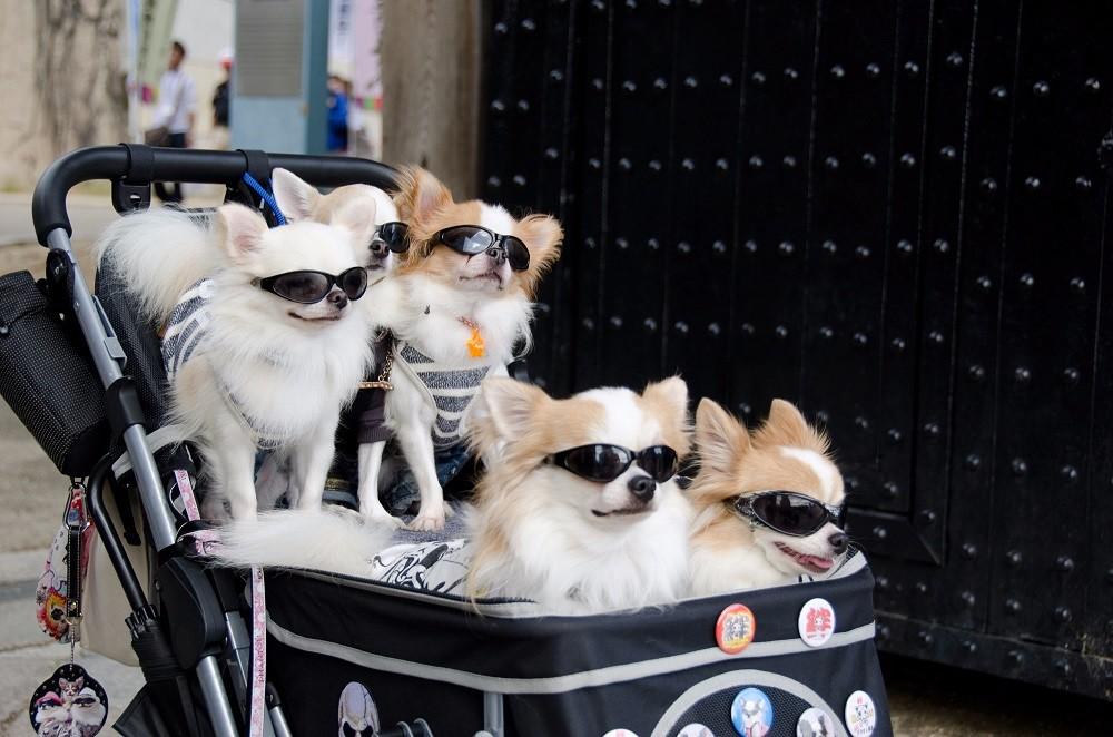 Vita da cani, in Giappone thumbnail