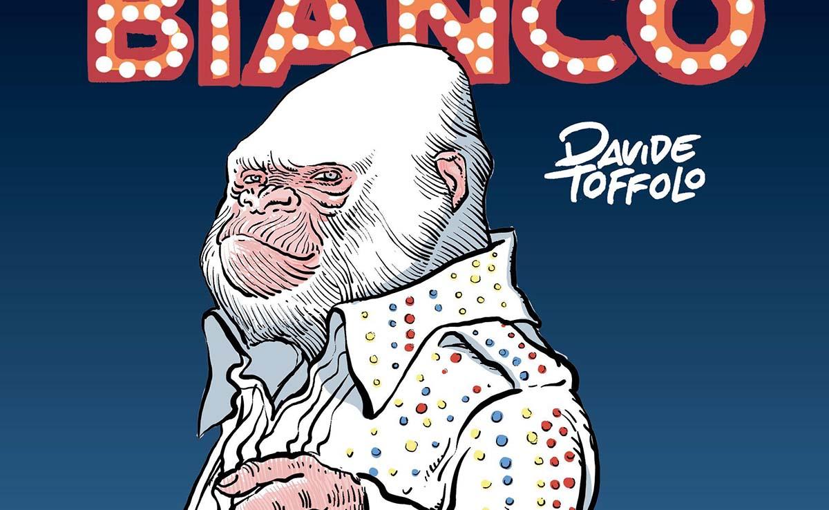 Il Re Bianco: la storia del gorilla albino Fiocco di Neve thumbnail