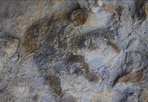 Scoperto il più ricco giacimento di orme di dinosauri del Regno Unito thumbnail