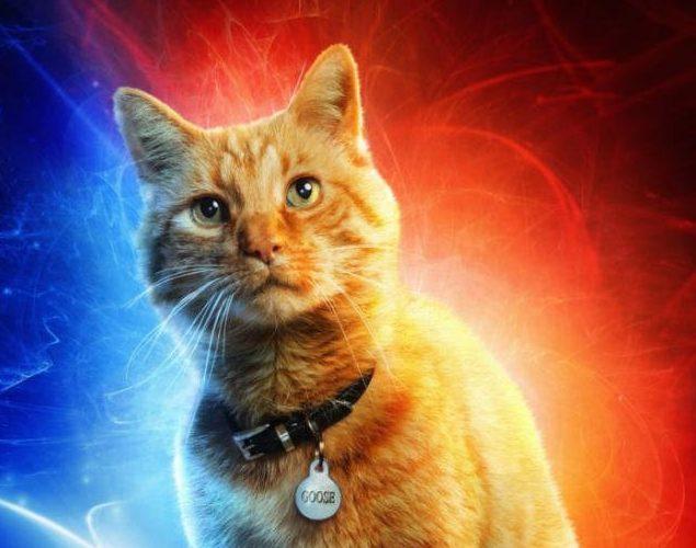 Captain Marvel: il gatto Goose conquista il pubblico dei test screening thumbnail