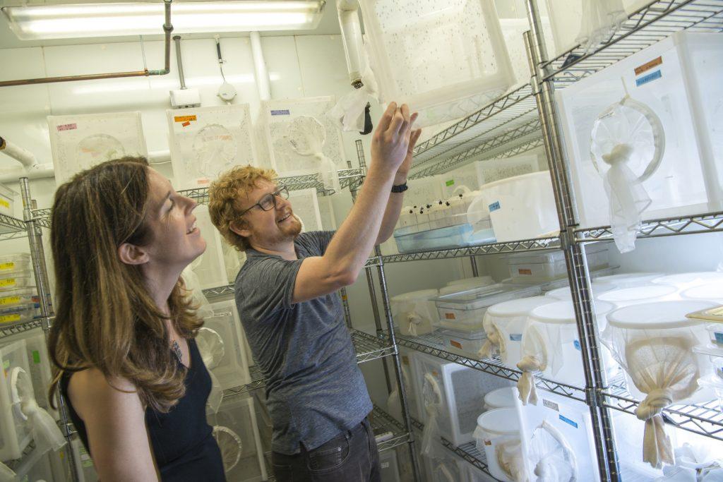 Leslie B. Vosshall e Ben Matthews, durante alcuni studi sulle zanzare. Credit: The Rockefeller University