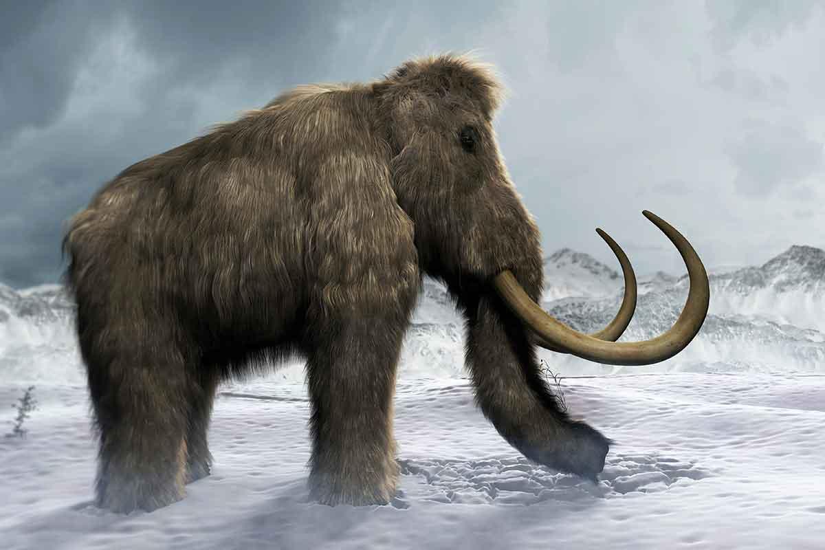 Risvegliate cellule di Yuka, un mammut vissuto 28 mila anni fa thumbnail