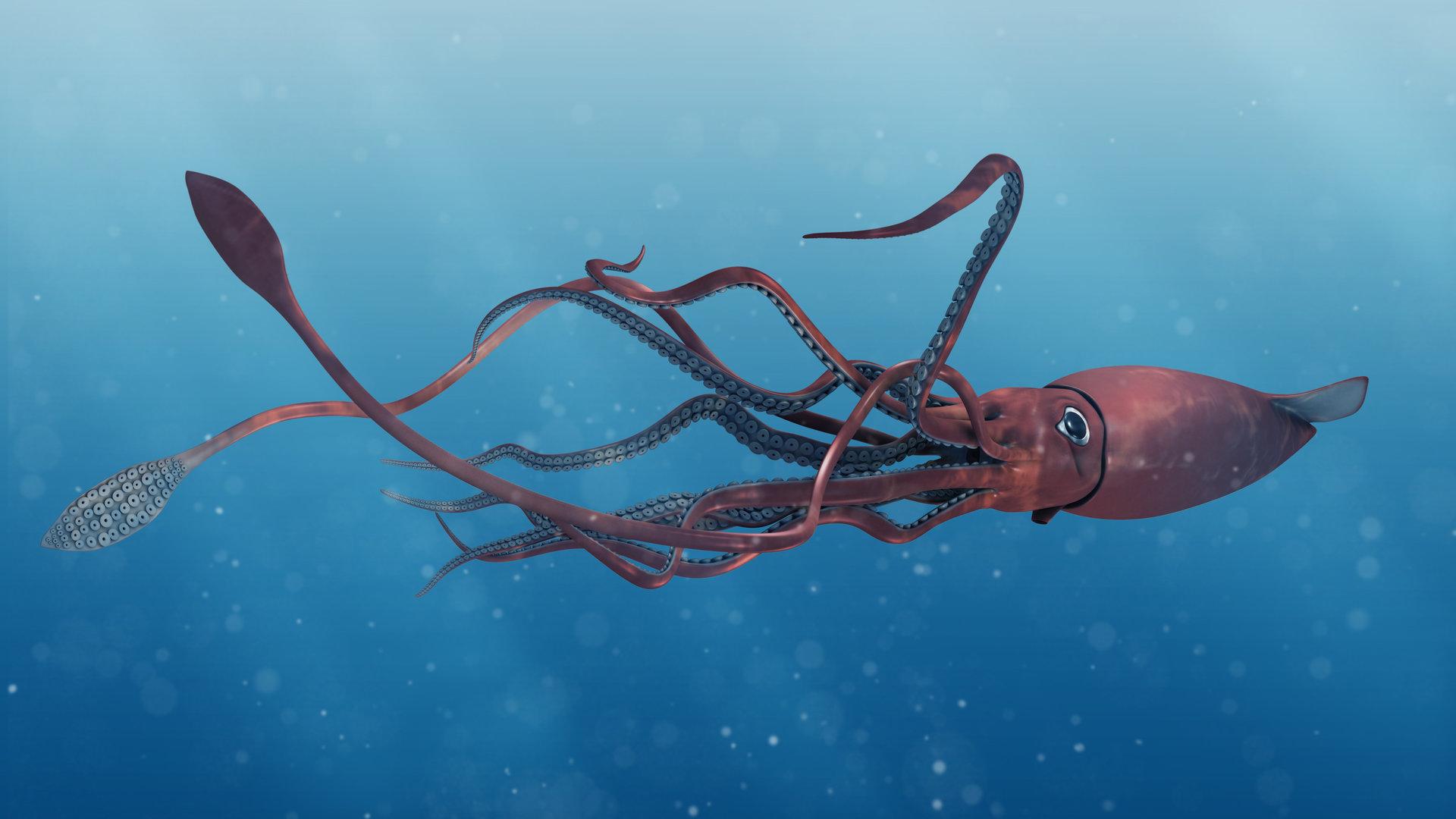 Calamaro gigante avvistato nelle acque territoriali USA thumbnail