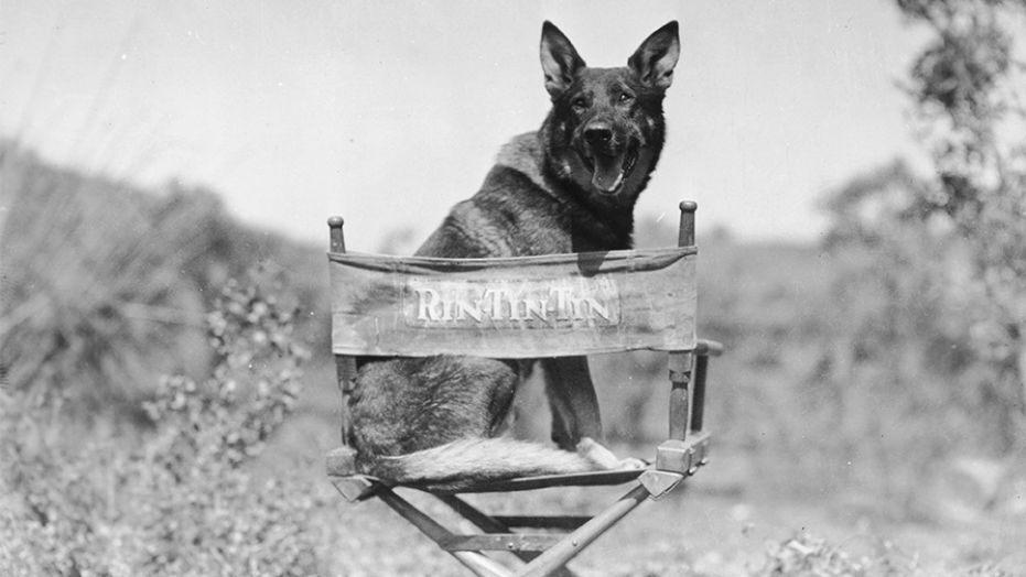 Warner Bros. vuole un live action su Rin Tin Tin thumbnail