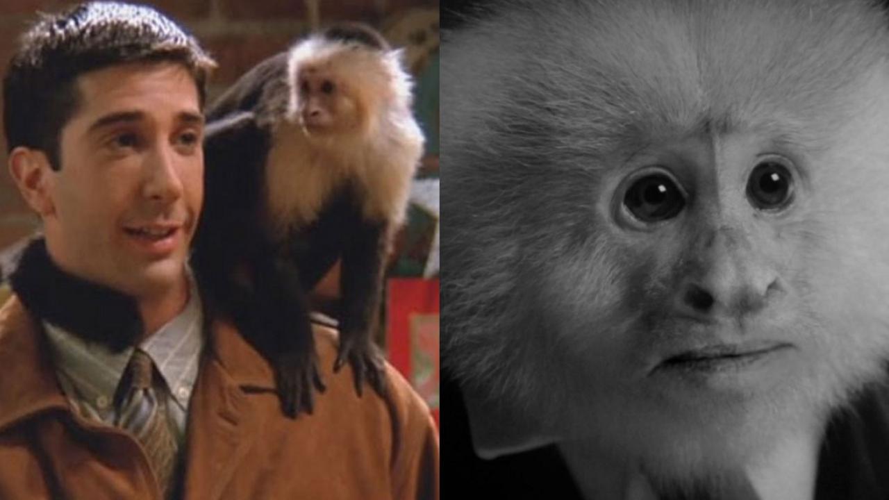 La scimmia del nuovo cortometraggio Netflix di David Lynch è Marcel di Friends thumbnail