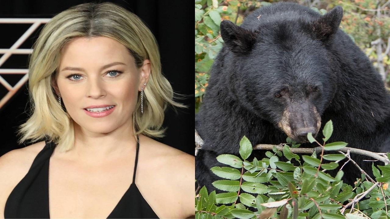 Cocaine Bear: il film sarà diretto da Elizabeth Banks thumbnail